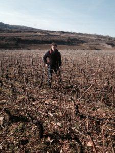 Lucien Rocault vignes -Le Clan des Sens