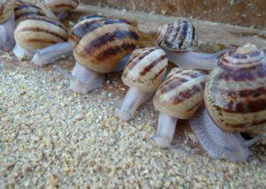 Escargots du Loir - Le Clan des Sens