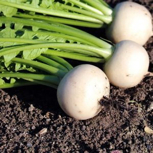 Légumes Anna Shoji - Le Clan des Sens