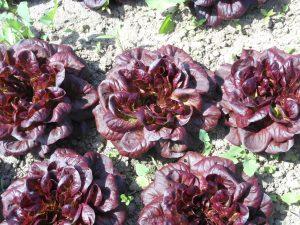 Ferme de la Touche - Salades - Le Clan des Sens