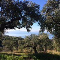 Grèce Kalamata - Profil Grec - Le Clan des Sens
